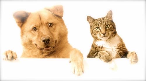 pet-friendly - バージョン 2